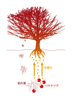 微生物による分解解説図